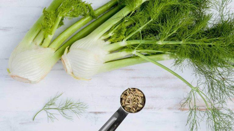 thảo dược hỗ trợ tiêu hoá