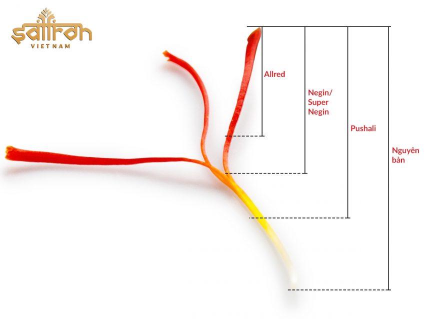 Giá 1g nhuỵ hoa nghệ tây - Chi tiết mức giá saffron tại Việt Nam
